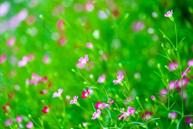 カラフルな美しいピンクのジプソフィラの花の庭