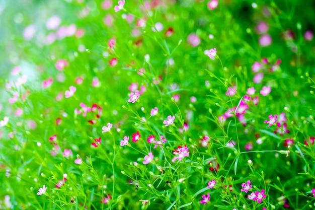 カラフルな美しいピンクのジプソフィラブティック花の庭