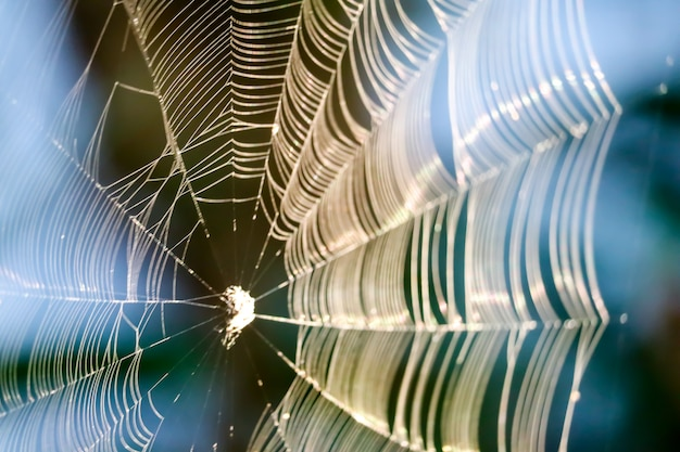 庭の木に獲物を捕まえるために操作するためのぼかしクモの巣