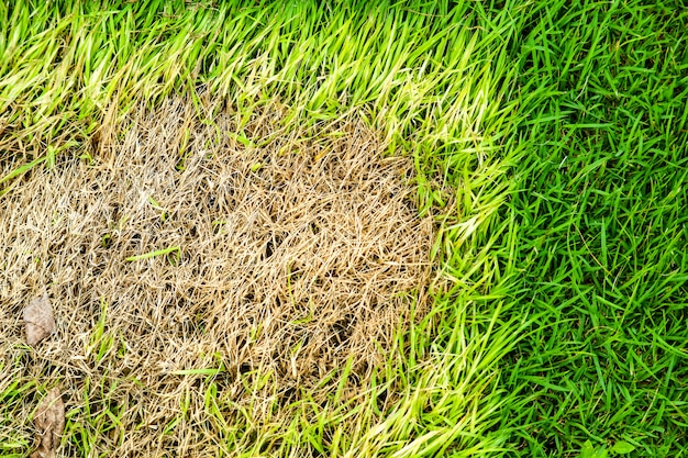 乾いた草の面積は成長できない、何かがこれを覆い、日光がない
