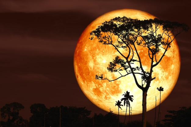 夜の赤い空のバックシルエットツリーにスーパーバック月