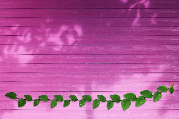 マゼンタの背景にコートボタン自然の境界線とシャドウツリーの緑の葉