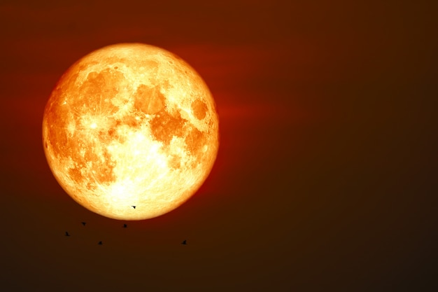 血の月と夕焼け空月光シルエット飛ぶ鳥
