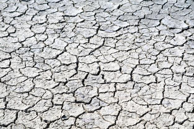Почва сухая, поверхность потрескавшаяся