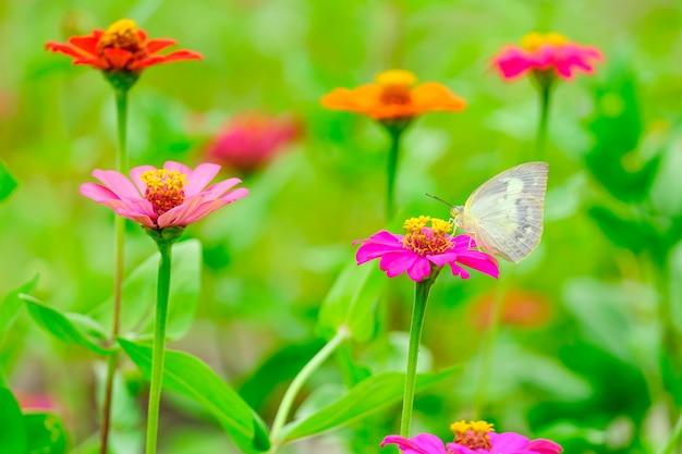 庭の花に美しい蝶。
