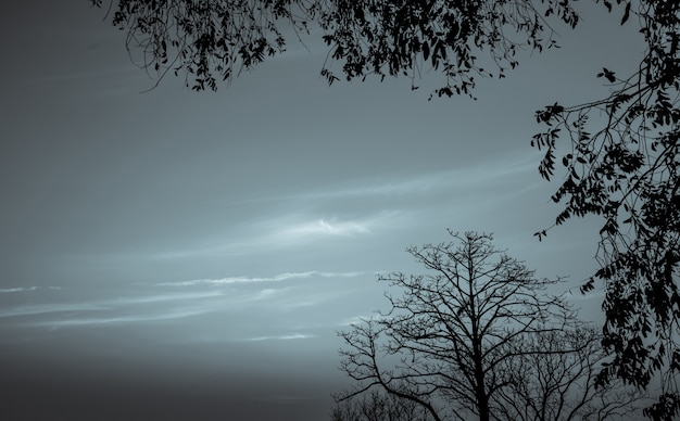 死と平和のための暗い劇的な空と白い雲の背景にシルエット枯れ木。ハロウィーンの日の背景。絶望と絶望的なコンセプト。自然の悲しみ。死と悲しい感情の背景。