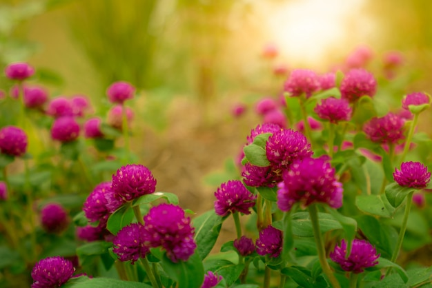 朝の日差しとトロピカルガーデンの紫色の花