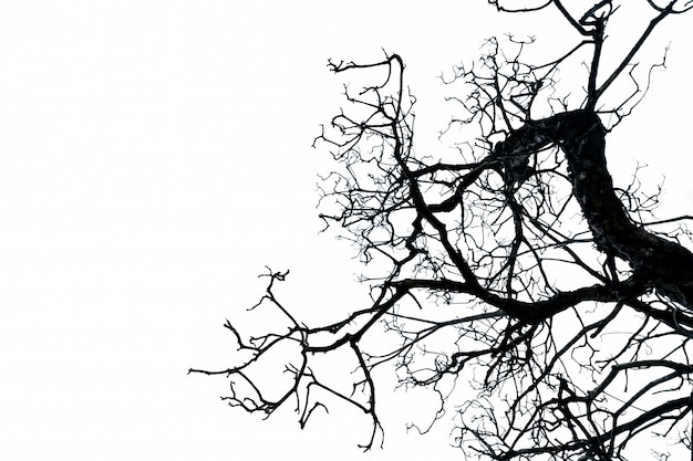 Силуэт мертвого дерева на белом фоне с копией пространства