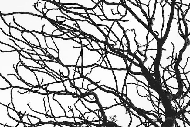枯れ木と枝のシルエットが分離されました。