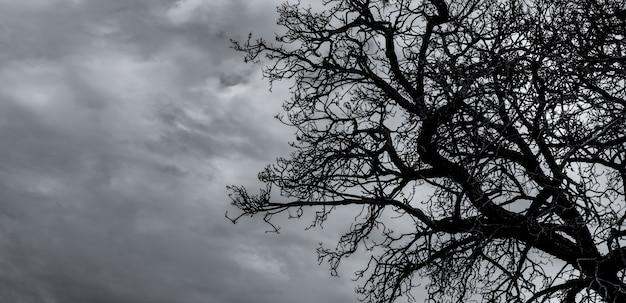 シルエット枯れ木と灰色の空の枝