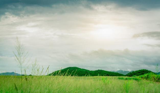 田舎の山の前の緑の芝生フィールド。自然の風景。ファームの緑の草の牧草地。白と灰色の雲と雨の後の空。