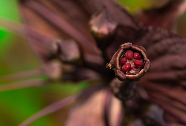 マクロは、暗い紫色の花の花粉の昆虫の詳細を撮影しました。森の中の昆虫による受粉。動物の野生動物。ジャングルでの小さな昆虫の生活。エキゾチックな森の花。