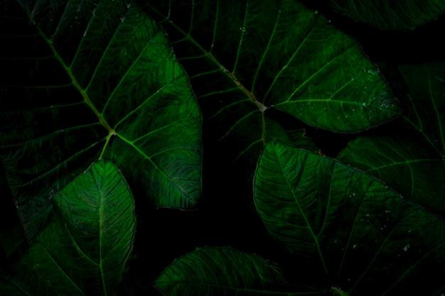 Зеленый лист с капли дождя в джунглях. капля воды на листьях.