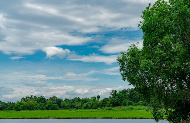 Зеленый лес за прудом. красивый вид на озеро с голубым небом и белыми пушистыми облаками. зеленое поле дерева и травы вокруг пруда. тропическая погода летом.