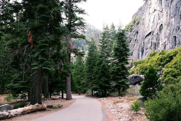 国立公園の美しい松の木の森の風景の背景を通って道