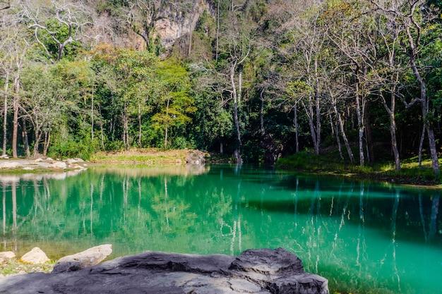 Болото в тхам луанг - кхун нам нанг нон форест парк, чианг рай, северный таиланд