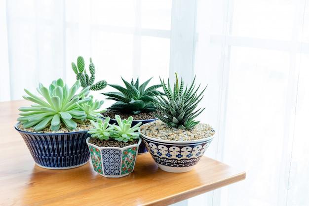 Коллекция различных кактусов и суккулентов в разных горшках