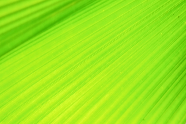ぼやけた動きの背景に緑のファンヤシの葉、