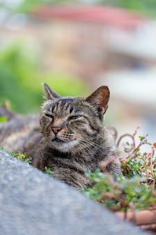 猫は涼しくするために植木鉢にいます。