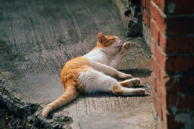 猫が体を掃除しています。