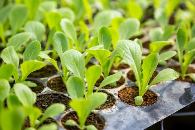 野菜の苗は有機栽培の鉢に植えられています。