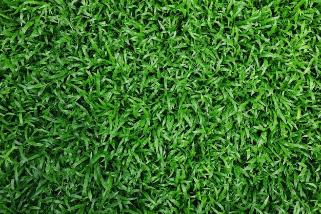 緑の草のテクスチャ背景。新鮮できれいな葉。