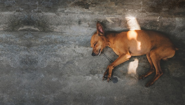 家の外、床に寝ている茶色の子犬犬。上面図