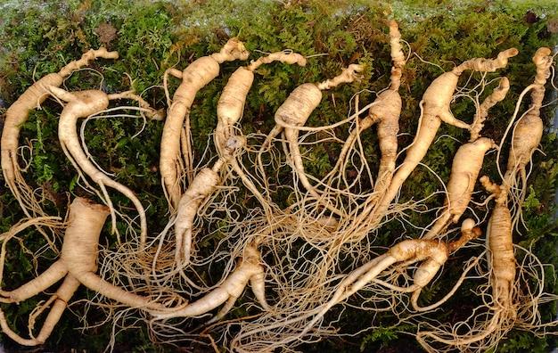 Свежий корейский корень женьшеня