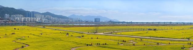 韓国釜山市の大きな黄色の菜の花のパノラマビュー。