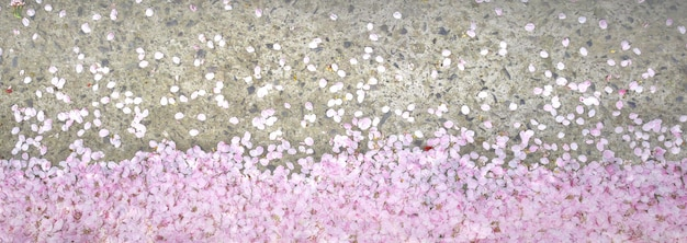 地面に桜の花びら