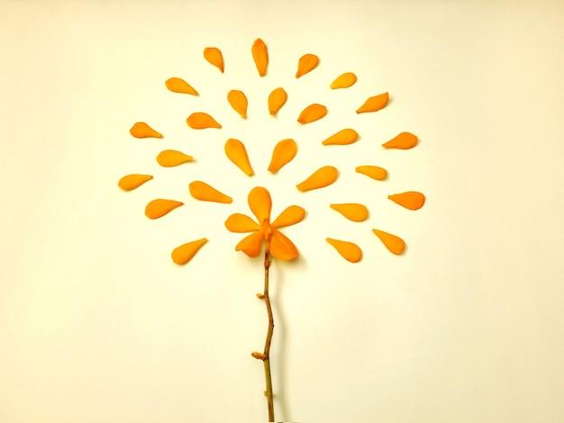 花びらと明るい黄色の黄色の蘭の花。夏フラット、トップビュー花の背景。