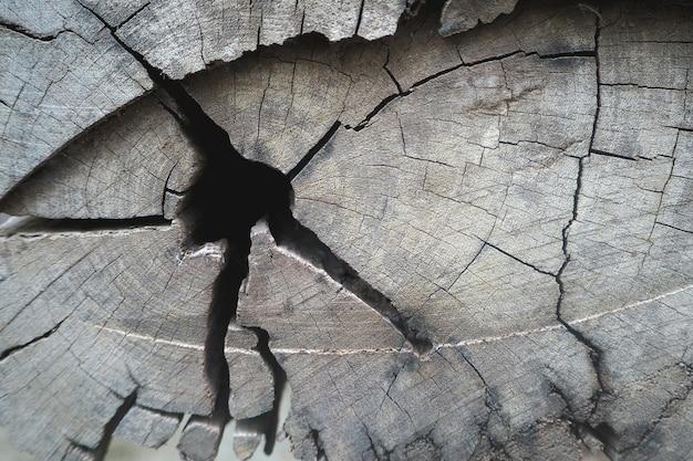 広い穴の周りに木を乾かす。切り取られた木の幹の木の質感。