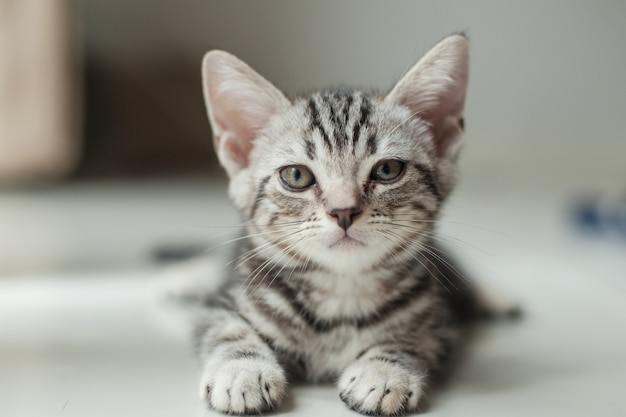 家の中の床に座っている飼い猫と飼い主の方へ