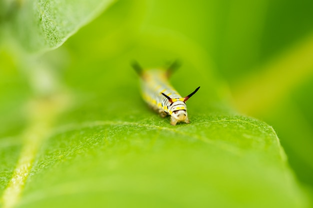Макро червь на зеленом листе в саду