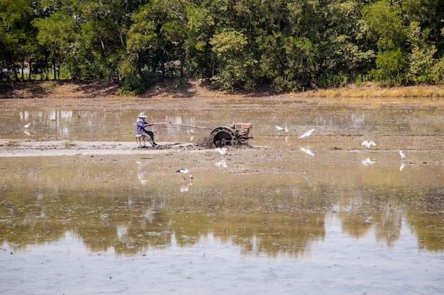 農夫は彼の田んぼで米を栽培するためにすきを運転しています