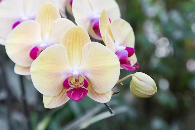 はがきの美しさのための冬または春の日に蘭の庭の蘭の花