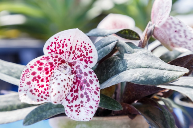 はがきの美しさのための冬または春の日の庭の蘭の花