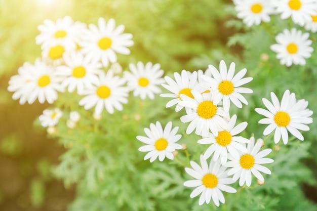 Цветок и зеленые листья фон в саду в солнечное лето