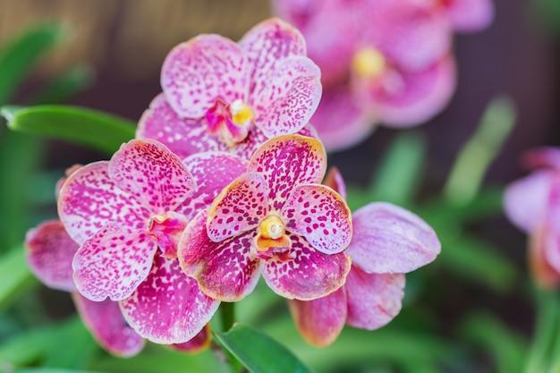冬または春の日に蘭の庭の蘭の花