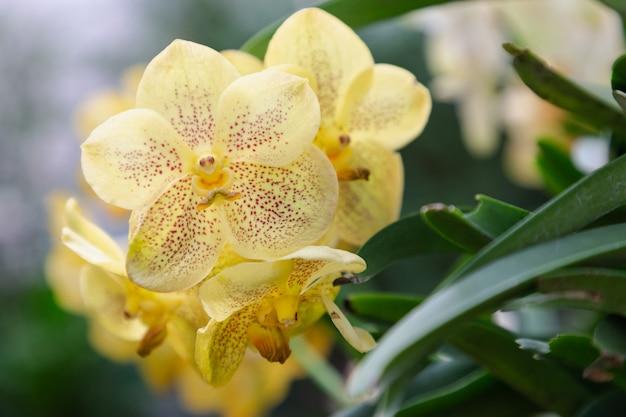 冬または春の日に庭の蘭の花。