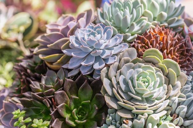 Суккуленты или кактусы в пустыне ботанический сад для украшения и сельского хозяйства дизайн.
