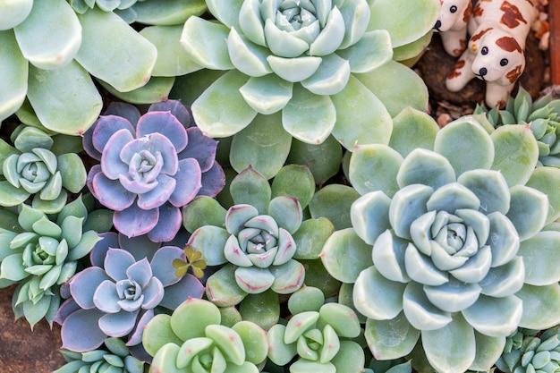 砂漠の植物園の多肉植物やサボテンの装飾と農業の設計