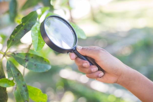 虫眼鏡を使っている子供。