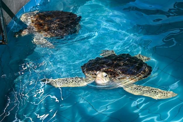 タイ水族館の亀の海。
