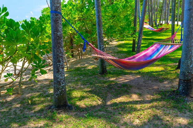 熱帯のビーチでヤシの木の間のハンモック。休日やリラクゼーションのためのパラダイスアイランド