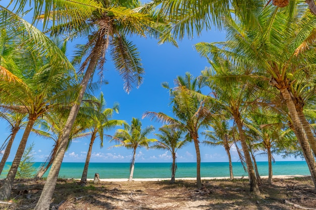 白い砂浜とタイ南部の青い空にヤシの木