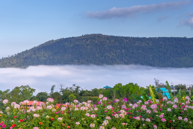 美しい花とカオコー、タイの霧