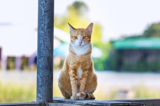 Кошка, наслаждаясь на открытом воздухе