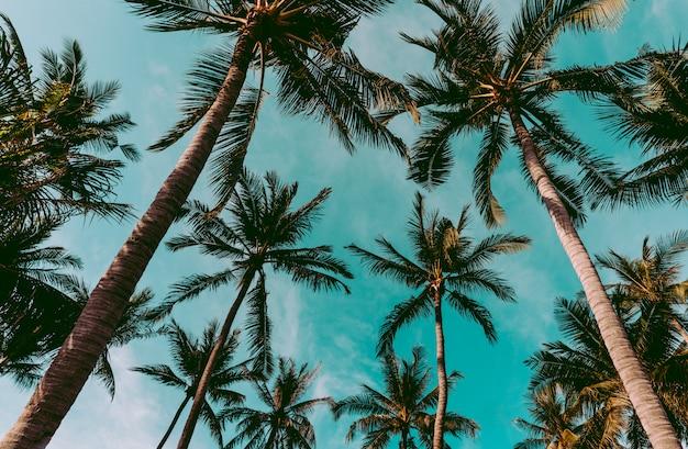 タイのビーチにあるココヤシのヤシの木、ぼやけた空のココナツの木