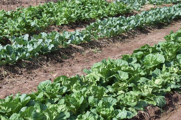 庭の緑の野菜
